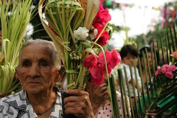 Disminuye en un 30% la venta de palmas en Domingo de Ramos