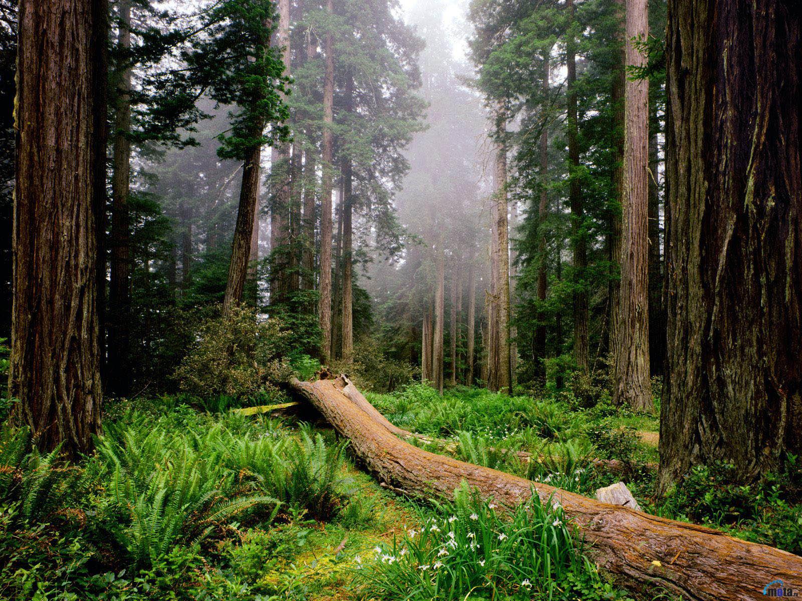 Día Internacional Del Bosque