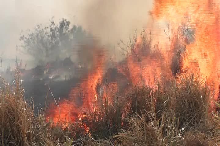 Sedema y Semarnat unen esfuerzos para prevenir incendios forestales; van 57 en lo que va del año