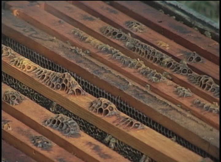 Veracruz podría ser el primer productor de miel en México