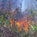 El 33% de los incendios forestales en Veracruz son originados por quemas agropecuarias mal realizadas