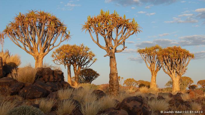 La protección del medio ambiente en Namibia empieza ya en el colegio