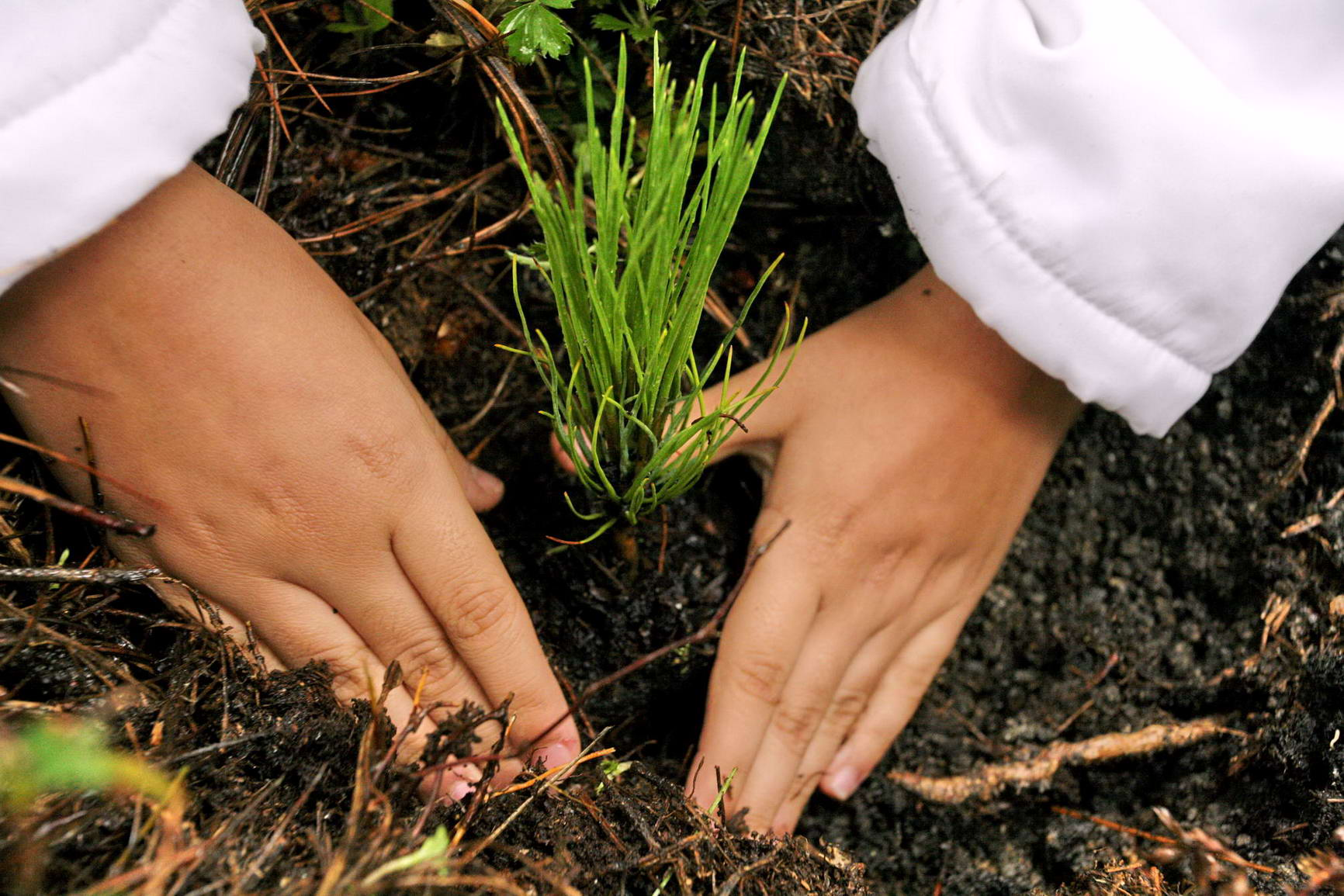Reforestará Conafor más de seis mil hectáreas de bosques en Veracruz