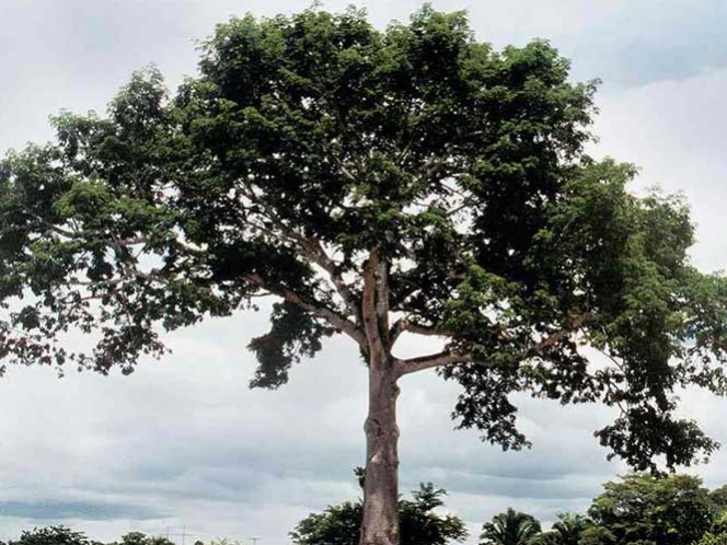 Reforestando celebrarán el Día del árbol en Coscomatepec