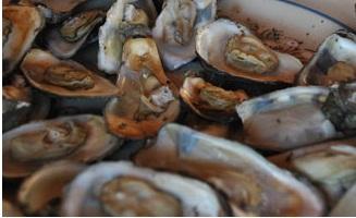 Ostiones de Mandinga, riqueza gastronómica veracruzana