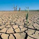 Sequía reducirá producción hasta en 30% en Veracruz