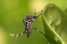 Implementa Secretaría de Salud acciones contra dengue en el sur del estado