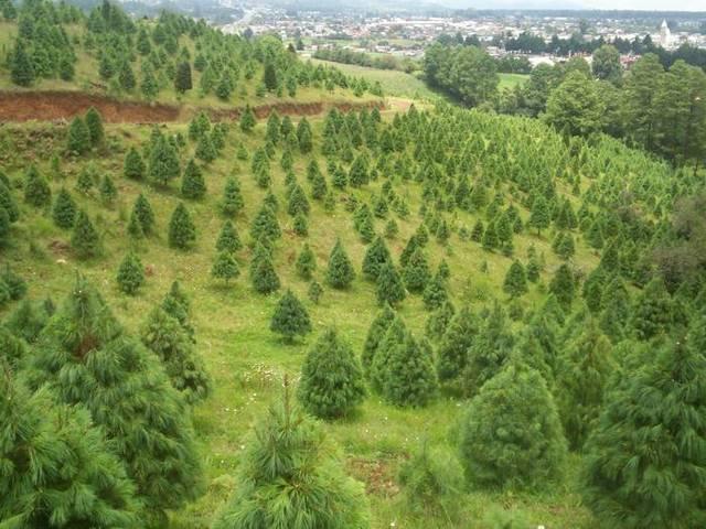 Con la plantación de miles de árboles la Comisión Nacional Forestal creará tres nuevos bosques en Veracruz