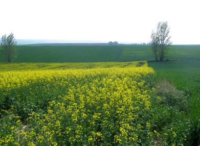 Se impulsa la producción de cultivos bioenergéticos en el estado