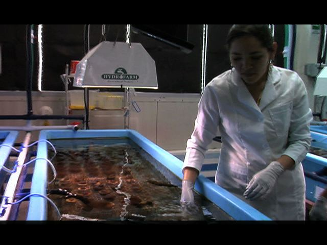 En Veracruz se instaló la primera unidad de manejo ambiental de corales marinos