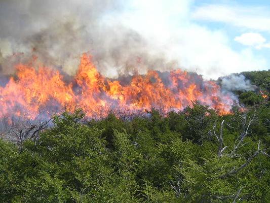 En Veracruz la temporada de incendios forestales culminó con 225 siniestros