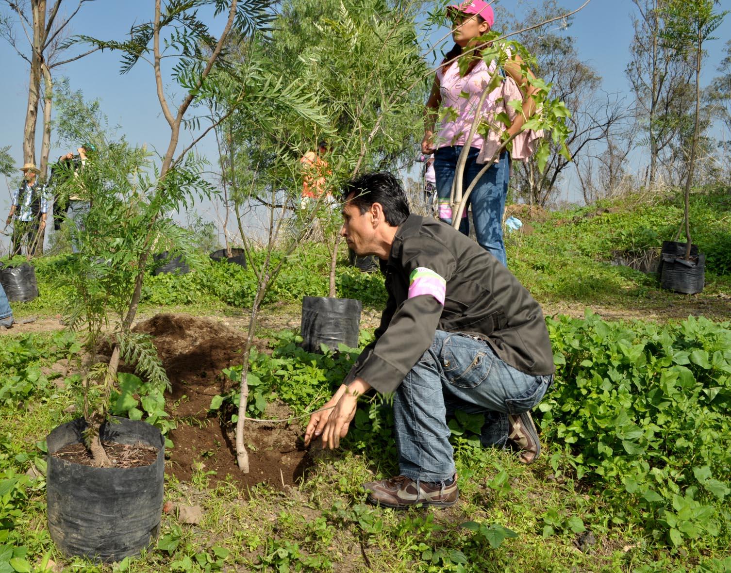 Repunta México en la calidad de la producción de plantas para reforestación
