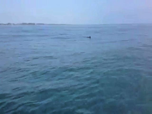 Alertan por la posible presencia de tiburón en Costa Esmeralda