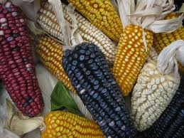 "Inundó ""Earl"" 100 hectáreas de maíz en Jamapa"