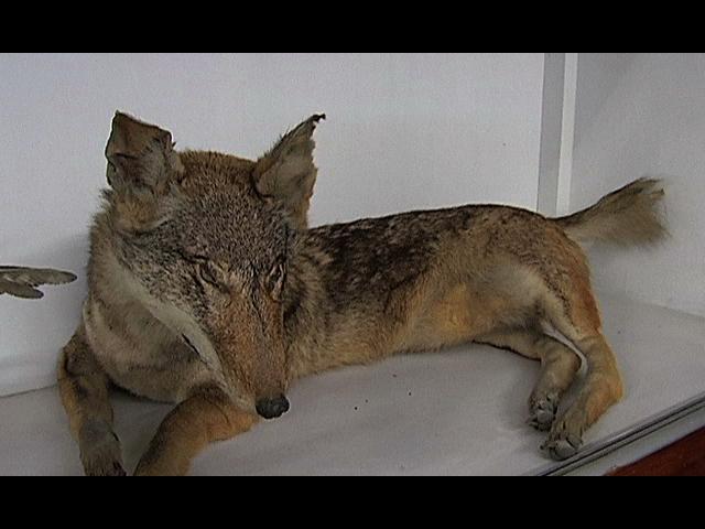 Museo de zoología de la UV; de suma importancia para la investigación y el conocimiento de la fauna local