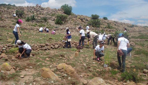 Conafor reforestará Cofre de Perote, Pico de Orizaba y biosfera de Los Tuxtlas