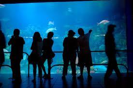Visitantes de diferentes estados disfrutan del Acuario de Veracruz