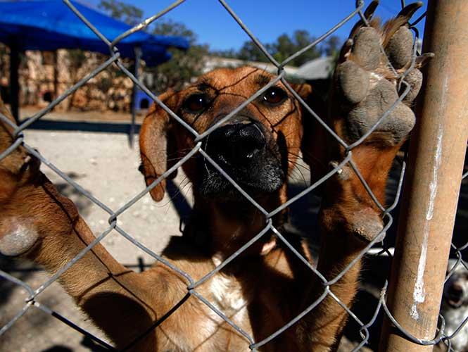 Aprueban en Xalapa Ley de Protección a los Animales