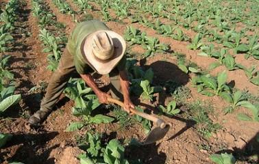 Difunde STPS derechos de trabajadores agrícolas en ocho lenguas