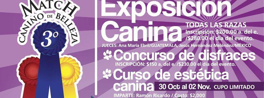Tercer Match Canino de Belleza fomenta cultura por el respeto animal