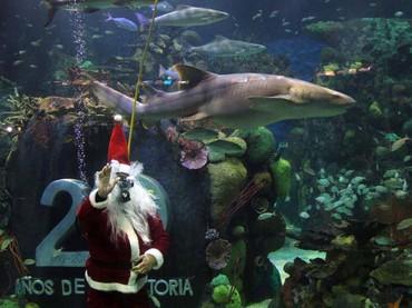 Santa Claus adelanta la navidad en el Acuario de Veracruz