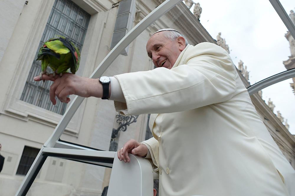 El papa Francisco se 'reconcilia' con las aves