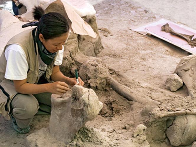 Estudio prueba que mastodontes americanos migraban entre norte y sur para adaptarse al clima