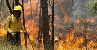 Se han registrado 179 incendios forestales en Veracruz: Conafor