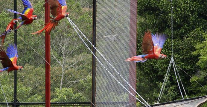 Desaparecen cinco guacamayas en la zona de Los Tuxtlas