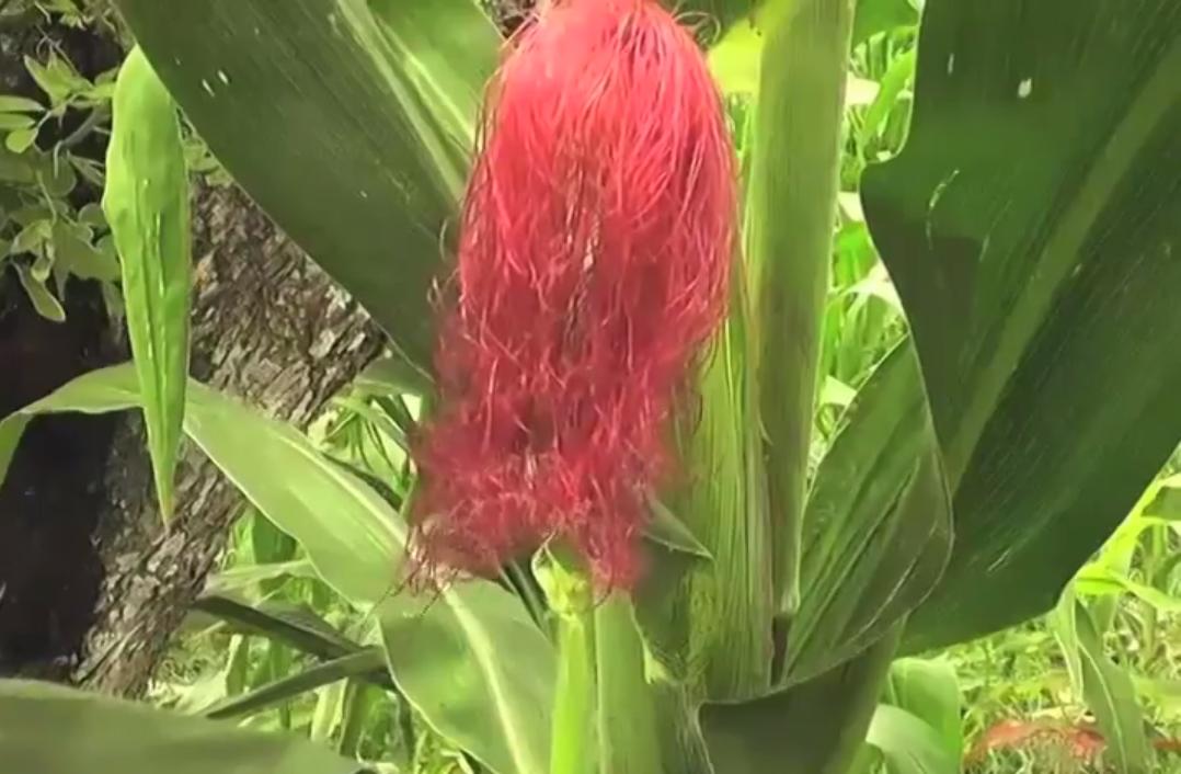 Las lluvias en Zona Sur benefician la cosecha de hortalizas y productos de temporada.