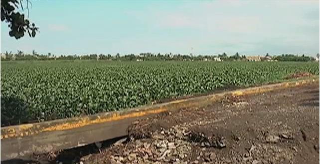 Piden a autoridades del puerto dar mantenimiento a la laguna Lagartos