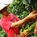 Descarta Sagarpa presencia de nueva variedad de roya del café en Veracruz
