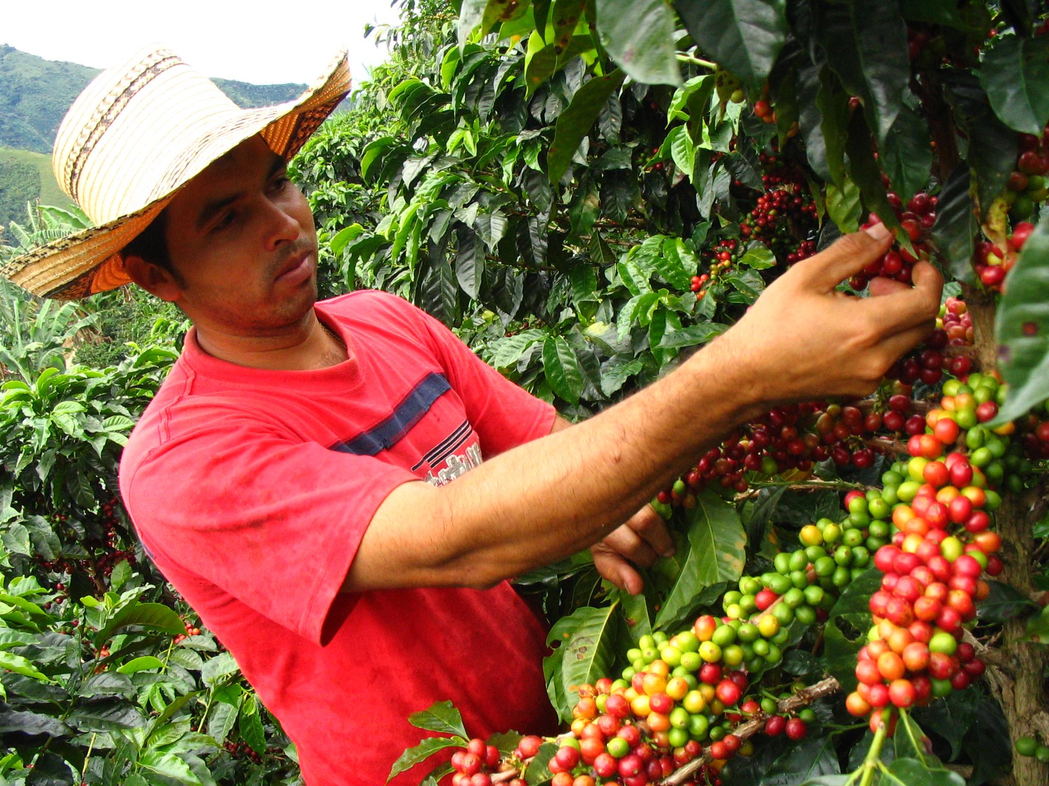Posicionará Sedarpa la producción del aromático con Instituto Nacional del Café