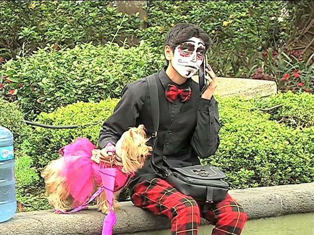 En Xalapa dueños disfrazaron a sus mascotas y pidieron su calaverita