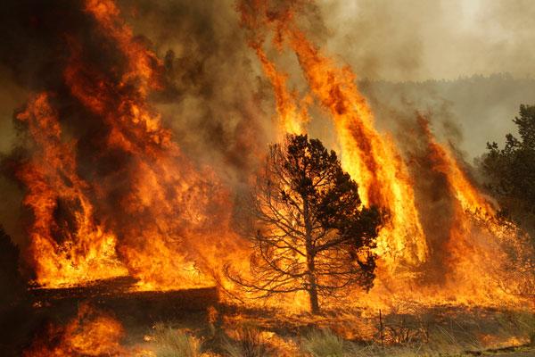 Ola de calor aumenta riesgos de incendios forestales: PC