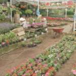 Expo Florece Xalapa 2017 se realizará en el parque Doña Falla