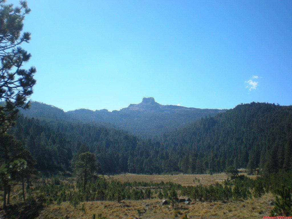 Aprueban dictamen contra la tala inmoderada y el comercio ilegal de madera