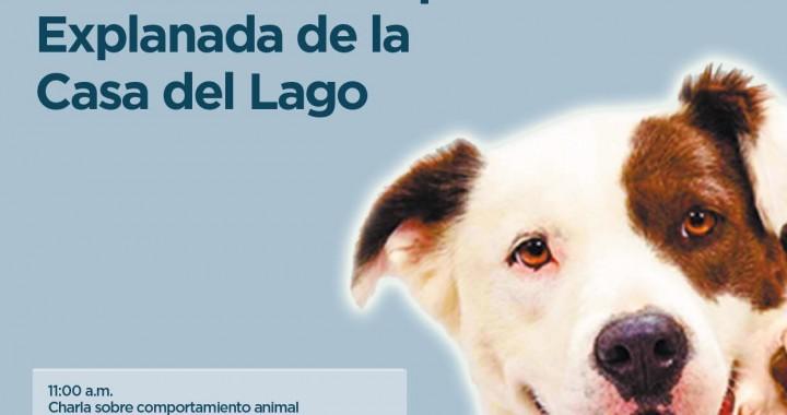 Este sábado pasarela de adopciones en Xalapa