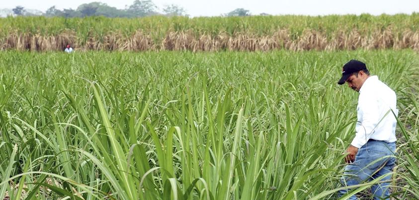 Acuerdan Veracruz y Sao Paulo cooperación tecnológica en producción de etanol