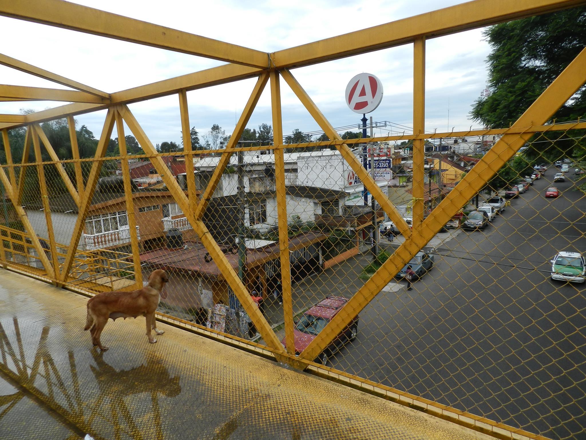 Hábito mortal, no usar los puentes o pasos peatonales