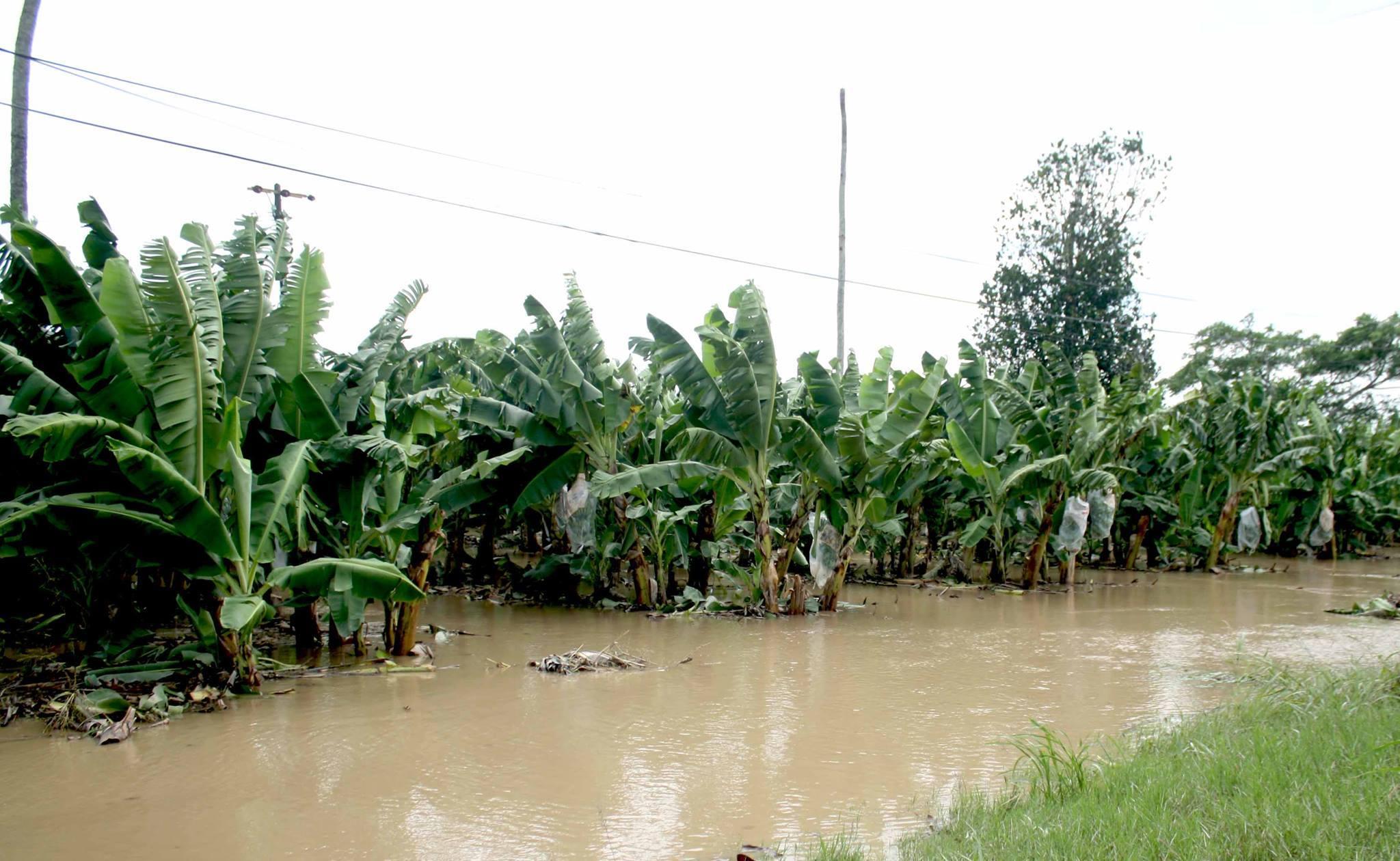 Ganaderos de San Rafael afectados por desborde del río Bobos