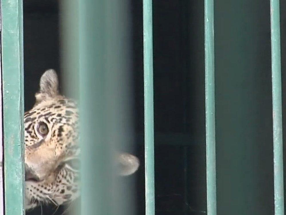 Zoológico de Veracruz ofrecerá atractivos a visitantes durante vacaciones de verano