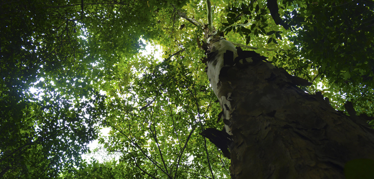 Presentan avances del mapeo de árboles de Xalapa