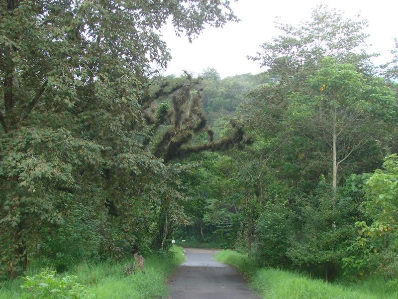 Redobla SSP vigilancia en Parque Natura