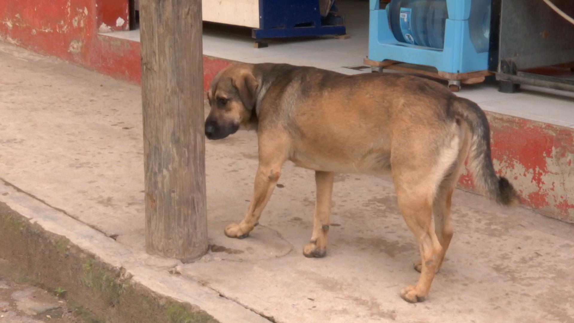 Aumenta abandono de perros en Córdoba