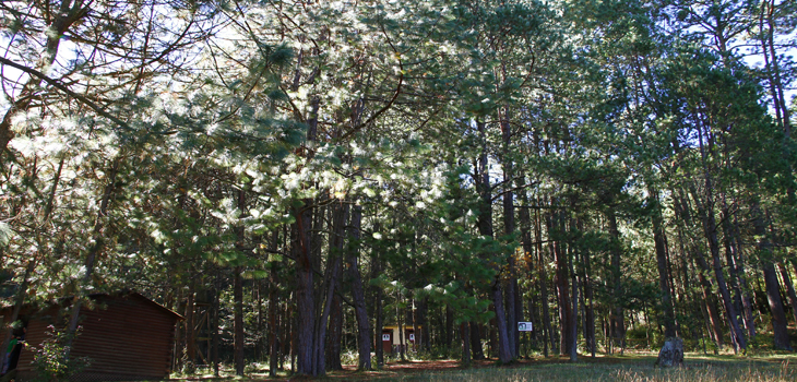 Área natural protegida San Juan del Monte, riqueza ecosistémica y gran potencial turístico