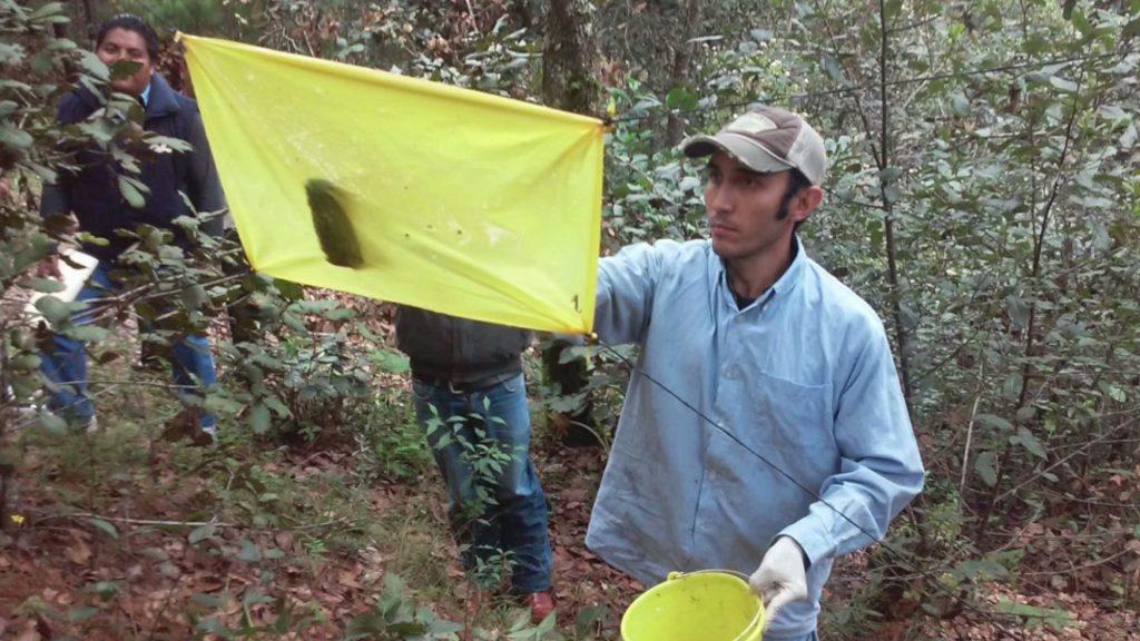 Conafor combate plagas forestales en la región del Cofre de Perote, Orizaba y Zongolica