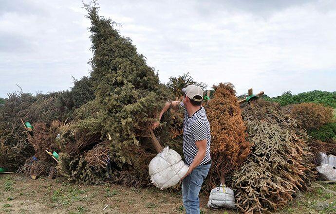 El 8 de enero iniciará la campaña Recicla tu Navidad 2021 en 60 municipios de Veracruz