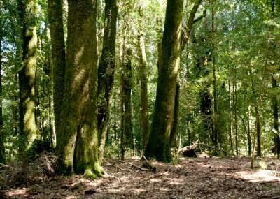 """Semarnat realiza foro virtual """"Los bosques y el cambio climático"""""""