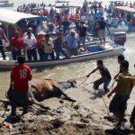 Reprueba PVEM tradiciones que impliquen maltrato animal como embalse y suelta de toros en Tlacotalpan
